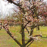チャリで行く「大阪城梅林」と野鳥を探しに淀川河川敷をブ~ラブ~ラ