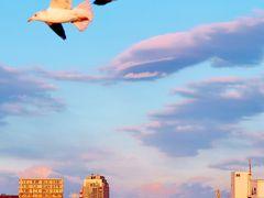 千葉港1/6 コンテナ埠頭・幕張メッセ沖を航行  ☆あるめりあ号出港16:30