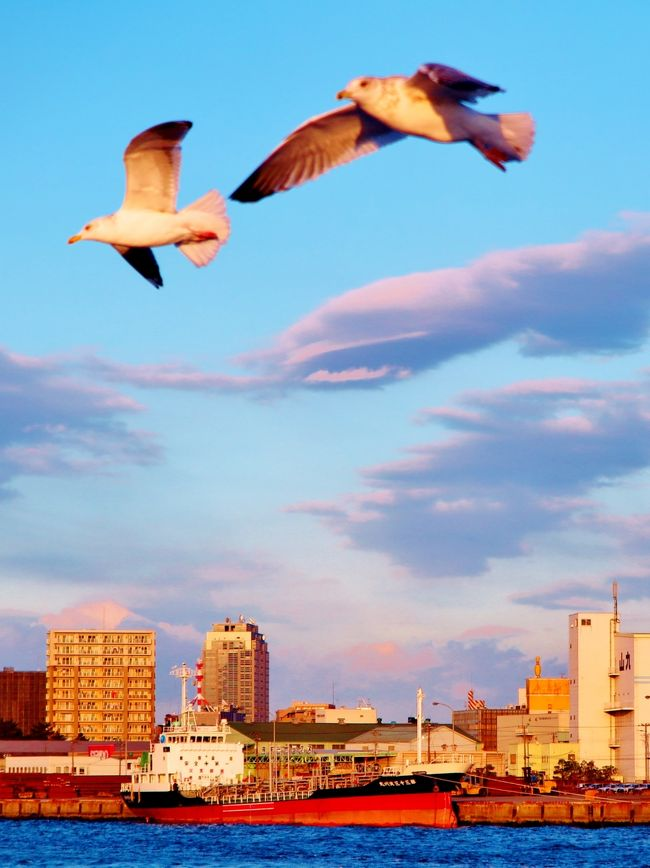 千葉港は、千葉県の市川市・船橋市・習志野市・千葉市・市原市・袖ケ浦市にわたる港湾。港湾管理者は千葉県。港湾法上の国際拠点港湾、港則法上の特定港に指定されている。<br /><br />千葉港は、東京湾奥部にあり、北は市川市より南は袖ケ浦市まで海岸線の総延長約 133 キロメートルと、京葉工業地域のほぼ全域にまたがる工業港である。港の面積は 24,800 ヘクタールで日本一を誇り、日本三大貿易港の一つに数えられる。千葉中央地区の蘇我地域には、JFEスチールがあり、企業城下町となっている。<br /><br />千葉港の主要な取扱貨物は、原油、石油製品、LNG(液化天然ガス)、鋼材、重油、鉄鉱石などであり、重化学工業の産業機能集積港となっている。臨海部の埋め立てと企業誘致によって拡大してきたことから企業専用施設が多く、現在でも港湾取扱貨物の9割以上は企業専用岸壁で取り扱われている。 (フリー百科事典『ウィキペディア(Wikipedia)』より引用)<br /><br />ガントリークレーン (gantry crane)とは、レール上を移動可能な構造を持つ門型(橋脚型)の大型クレーンである。港湾の岸壁に設置されてコンテナなどの貨物の積み卸しを行うクレーンを指すことも多く、特定重要港湾、重要港湾のほとんどに設置され、貨物の荷役の効率化で欠かせない機械の一つである。なお、ガントリー(gantry)とは、門型の構造物を指す言葉。コンテナはストラドルキャリアが運ぶ。<br />(フリー百科事典『ウィキペディア(Wikipedia)』より引用)<br /><br />新工場夜景ミステリークルーズ <br />ぽけかる倶楽部お客様限定クルーズ! 参加費 \3,980〜(クルーズ代+軽食代) 大ブームの工場夜景クルーズに新航路が登場!<br />工場群の光彩は格別!また、大型船の大迫力をお楽しみに!<br />製鉄や化学などの重工業を中心としたプラントが沿岸部に連なる景観は圧巻! 火力発電所も多く、炎を吹き上げる煙突は迫力満点!<br />16:30 工場夜景クルーズ(約90分)<br /><br />工場散歩人がご案内する工場夜景クルーズ  1/28(土)<br />遊覧クルーズ船「あるめりあ」に乗船し千葉港を出航!<br />東京湾に沈む夕陽を眺めたあと、「JFEスチール東日本製鉄所」や「三井造船千葉事業所」といった京葉工業地帯の工場夜景を楽しむ魅惑の時間をお過ごしください。(下記より引用)<br /><br />千葉ポートサービスについては・・<br />http://www.chiba-port.com/<br /><br />旅行時期 2013/08/17<br />横浜⇒羽田クルーズa 川崎工場運河を航行 ☆京浜工業地帯の偉容まぢかに<br />http://4travel.jp/travelogue/10811088<br />横浜⇒羽田クルーズb 多摩川〜羽田D滑走路沖で ☆離着陸する旅客機を仰ぐ<br />http://4travel.jp/travelogue/10811098<br /><br />旅行時期 2014/01/12 -<br />横浜港遊覧クルーズA ピア象の鼻〜出航 ☆ぽけかる倶楽部の貸切<br />http://4travel.jp/travelogue/10856444<br />横浜港遊覧クルーズB 横浜ベイブリッジを潜り抜け ☆快晴の海 穏やかに<br />http://4travel.jp/travelogue/10856479<br />夕日〜黄昏 移りゆく刻 羽田空港の海辺付近 ☆この佳き一日に感謝を!<br />http://4travel.jp/travelogue/10811115<br />