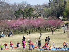 2013春、大高緑地公園の梅林:八重白梅、八重紅梅