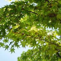 トラブル続きでも新緑が美しかった軽井沢&草津