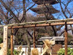 上野東照宮4/4 五重塔近く: 冬ぼたん 満開、凛として ☆立春はあした