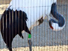 上野Zoo3/3 丹頂鶴・雷鳥・虎・梟・猿など見て回り  ☆珍しい生態を観察して