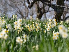 花を求めて、和泉リサイクル環境公園へ