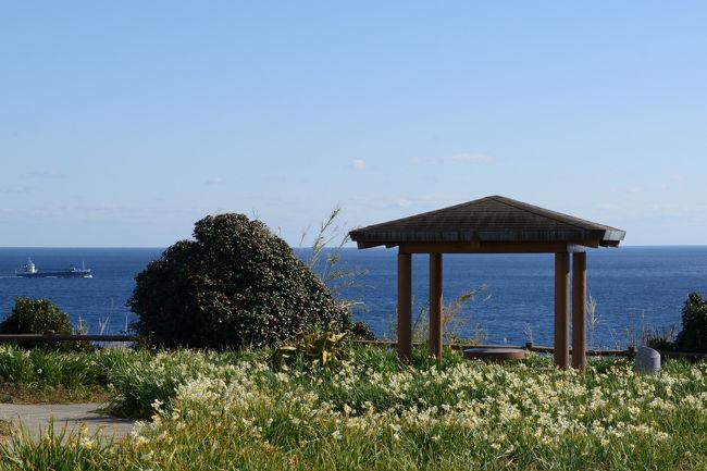 樫野崎灯台にスイセンが咲いている(わかやま花旅)とのことで、<br />青空の下、本州最南端の潮岬まで、快適な日帰りドライブを楽しむ。<br />(総走行距離530km)<br /><br />最初に訪れたのは、橋杭岩(串本町)。<br />そして、スイセンの咲く樫野埼灯台、潮岬、等を回る。<br /><br />・橋杭岩<br /> 串本から大島に向かい、約850mの列を成して大小40余りの岩柱がそそり立っています。その規則的な並び方が橋の杭に似ていることからこの名が付きました。海の浸食により岩の硬い部分だけが残り、あたかも橋の杭だけが立っているように見えるこの奇岩には、その昔、弘法大師と天邪鬼が一晩で橋を架ける賭をして、一夜にして立てたという伝説も伝わっています。吉野熊野国立公園地域にあり、国の名勝天然記念物に指定されています【南紀串本観光ガイドより】<br /><br />・樫野埼灯台<br /> 大島の東端、樫野の断崖に日本最古の石造り灯台が今も活躍しています。現在は自動点灯の無人灯台で内部は非公開であるが、ラセン階段を登り、遠くは太地町の梶取崎まで見通せる。また、園地内にはかつて常駐していたイギリス人技師が故郷を思い植えたと言われる水仙が今も群生しており、冬には可憐な花が咲き乱れ、あたりは甘い香りに包まれます。樫野灯台口駐車場から徒歩5分。(高さ10.20m、光度53万カンデラ、光達距離18.5海里)【南紀串本観光ガイドより】<br /><br />・南紀串本観光ガイドのHP <br />    http://www.kankou-kushimoto.jp/