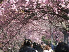 ☆河津桜③ と熱川
