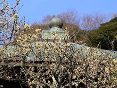 鎌倉の梅の名所へ:宝戒寺、荏柄天神社、瑞泉寺