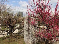 浪速の春の芽をさがして、河内から上町台地周辺を巡る