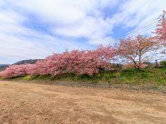 春は桜の国へ~伊豆日帰り旅行~