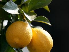 尾道・しまなみ海道・鞆の浦2/6 伯方の塩ラーメンと瀬戸田のレモンケーキ