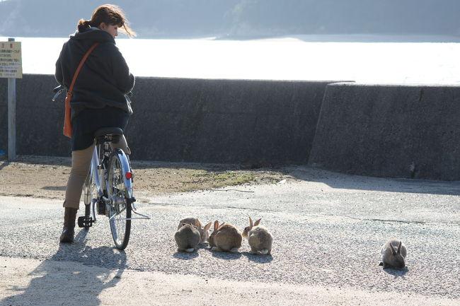 ウサギ うさぎ 兎 usagi rabbit・・・<br />この島はまさにウサギ天国です(笑)<br /><br />今回の旅行を計画したのも、実を言うと妻がウサギの島に行ってみたいと言いだしたのがきっかけです。私はまったく知りませんでした。でもそんな島があるなら私も見てみたい。そこで4トラやガイドブックなどで勉強すると、大久野島は過去に悲惨な歴史を背負っていたことを知りました。<br /><br />地図からもその存在を消された毒ガス製造島。<br />でも今は観光客がどっさり訪れるうさぎパラダイス。<br /><br />動物嫌いでないなら、この島は必見ですよ!<br />なーんて1回行っただけのウサギ初心者が言う言葉でもないか(笑)<br /><br />大久野島ゆいいつの宿泊施設・休暇村大久野島<br />http://www.qkamura.or.jp/ohkuno/