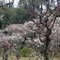 枚方の梅の名所◆『意賀美神社』の梅林