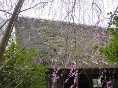 【坂東札所巡礼2-1】札所1番杉本寺を再度お参りして報国寺に寄り道