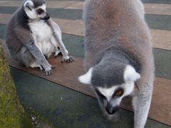 シンガポール家族旅行� シンガポール動物園&ナイトサファリ