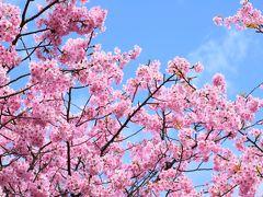 早春の伊豆で癒されて1―河津の河津桜まつりへ―