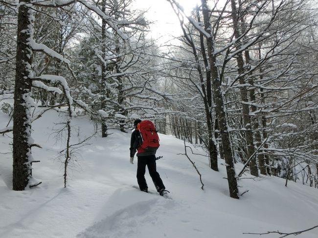 ホテルアンビエント蓼科に滞在中、できる限り雪の原野に飛び出しスノーシューをする。最初はホテル近くの散歩コースで足慣らしをし、次第に難易度を上げていく。後半は長門牧場の広大な雪原でしっかり足腰を鍛え、最後はホテル専属のネイチャーガイド「木島」さん(写真)と2人で雪の蓼科山に入る。本格的なスノーシュー・トレッキングである。<br /><br />私のホームページに旅行記多数あり。<br />『第二の人生を豊かに』<br />http://www.e-funahashi.jp/<br />(新刊『夢の豪華客船クルーズの旅<br />ー大衆レジャーとなった世界の船旅ー』案内あり)