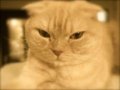 ☆猫巡礼の旅⑤ ー新宿 きゃりこ篇☆