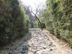 歩いて見た!~箱根旧街道  石畳と杉並木 (屏風山ハイキング)~