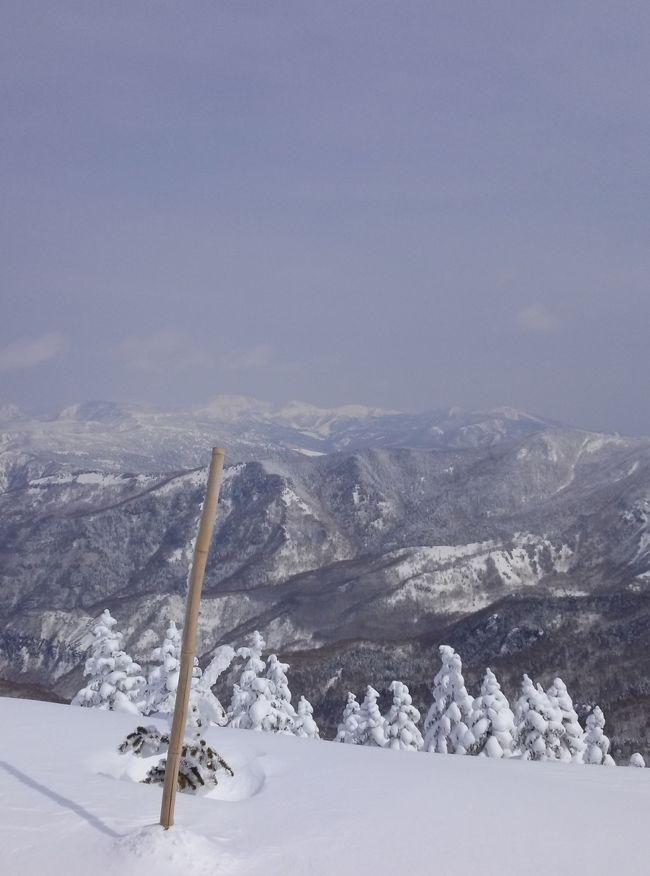 毎年のスキーです。<br />最年長は70超え、最年少は20歳の9人でいつもと何ら変わらないスキー旅行です。