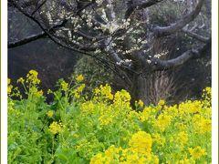Solitary Journey [1530] 雨降る中で観梅'世界の梅公園'<春の車旅~相生・奈良・伊賀上野・志摩・伊勢・姫路・岡山 >兵庫県たつの市
