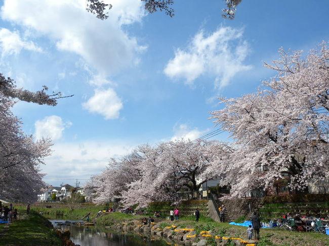 暖かくなってきて、そろそろ桜だなぁ、、と思い見てみたら、<br />一年前の桜の写真をUPし忘れていました!!<br />というか、4TRAVELをほったらかし状態でした。反省!!<br />今年の桜の前に、駆け込み更新します。<br />2014年4月。ご近所さんと一緒に、近くの野川河川敷で、花見BBQ。<br />その合間に、カメラ片手に桜の写真をとりました。