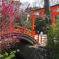"""京都に春がきたぁ♪ (前篇) ◇ 数時間ばかりの""""里帰り""""~出町柳から下鴨神社へ"""