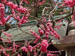 春の陽気の京都へ再び