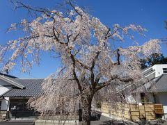 もうすぐ桜開花。地元の小さな散歩道 。