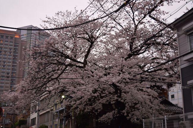 今年も桜の季節となりました(~▽~@)♪♪♪<br /><br />というかいつまで持つか今年の桜・・・<br /><br /><br />恵比寿ガーデンプレイス近くに渋谷区の保存樹木の桜があります。<br /><br />その桜を観察してみました。<br /><br /><br />そして、カフェもね^^♪