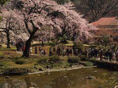 今年も咲きました♪ ー小石川後楽園の桜ー