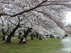 東京・文京区のお花見散歩~播磨坂の文京さくらまつりと小石川植物園