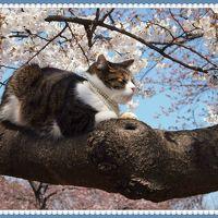 2年ぶりの東京の桜と・・・展覧会めぐりの・・・ひとり旅