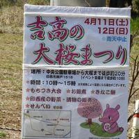 吉高の大桜を見に行きましたが・・・