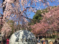 花盛りの桜の下をゆ~たり東京散歩が楽しい、、、、。 3月末  2015年
