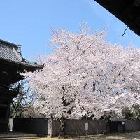 鴻巣 勝願寺の桜☆長木屋の川幅彩うどん☆2015/03/31
