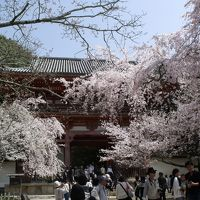 春爛漫の京都を歩く