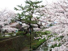 2015年 山口市 美術展と一の坂川の桜を見ながら散歩