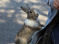 2015 ウサギの楽園・大久野島に春が来た!&マッサンの故郷・竹原