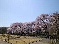 桜咲く、神代植物園