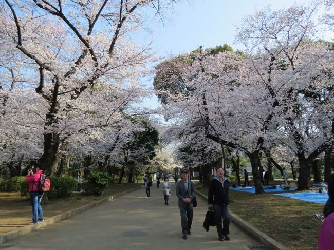 東京の桜は今が満開、一日中晴天、気温16〜22°、微風とのこと、最高のコンデション、これは行くしかない。朝6時20分佐倉市臼井の自宅を出発し、京成上野駅に7時34分に到着です。<br /><br />上野公園(うえの桜まつり;1,200本)を散策し、かっぱ橋本通りを歩いて浅草へ。雷門前の並木通りにある並木藪蕎麦に12時50分に到着、20分待ってちょっと遅めの昼食です。<br /><br />浅草寺と隅田公園(墨堤さくらまつり;670本)を散策し、東京スカイツリーへ。押上駅に16時30分に到着し、自宅には17時45分に帰り着きました。<br /><br />満開の桜と文化の香り高い上野公園を堪能、かっぱ橋道具街と下町の聖地浅草に立ち寄り、隅田公園では隅田川の桜と東京スカイツリーがお出迎え、最高の一日になりました。<br /><br />この旅行記では、サクラ満開の上野公園を散策しています。