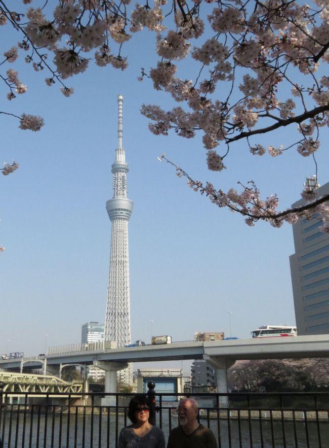 東京の桜は今が満開、一日中晴天、気温16?22°、微風とのこと、最高のコンデション、これは行くしかない。朝6時20分佐倉市臼井の自宅を出発し、京成上野駅に7時34分に到着です。<br /><br />上野公園(うえの桜まつり;1,200本)を散策し、かっぱ橋本通りを歩いて浅草へ。雷門前の並木通りにある並木藪蕎麦に12時50分に到着、20分待ってちょっと遅めの昼食です。<br /><br />浅草寺と隅田公園(墨堤さくらまつり;670本)を散策し、東京スカイツリーへ。押上駅に16時30分に到着し、自宅には17時45分に帰り着きました。<br /><br />満開の桜と文化の香り高い上野公園を堪能、かっぱ橋道具街と下町の聖地浅草に立ち寄り、隅田公園では隅田川の桜と東京スカイツリーがお出迎え、最高の一日になりました。<br /><br />この旅行記では、浅草寺を後にして、台東区側の隅田公園を散策し、言問橋を渡り、墨田区側の隅田公園に立ち寄り、東京スカイツリーまで歩いています。