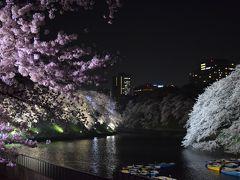 満開の桜を楽しみながら・・・都心の夜桜散歩