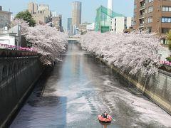 2015年、目黒雅叙園と目黒川の満開の桜