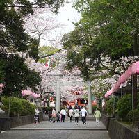 桜満開の富士浅間大社へ日帰りプチ旅行