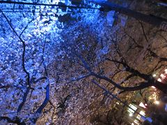 目黒川に夜桜見物