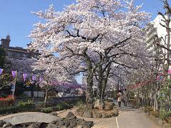 2015年お花見 東京・播磨坂の桜並木と荒川・小松川千本桜