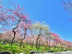 春の陽気に誘われて・いなべ農業公園の梅まつり