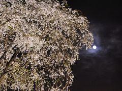 二年後の2017年 リベンジです!7分咲きでした(*>∀<*) いざ!行かん***桜満開***仕事をさっさと切り上げて 六義園へ夜桜見物へ(*>∀<*)