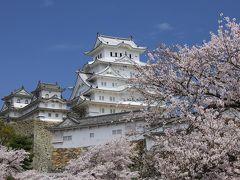グランドオープンした姫路城と桜