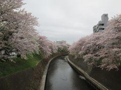 2015 週末散歩と桜&チョットおまけ(藤沢・湘南台駅~横浜・ゆめが丘駅)